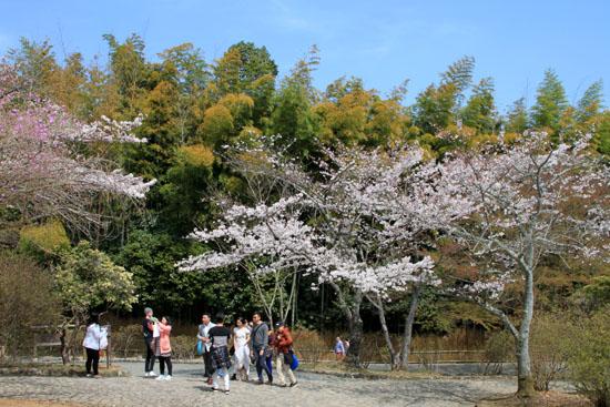 16桜だより18 嵐山3 亀山公園_e0048413_20434745.jpg