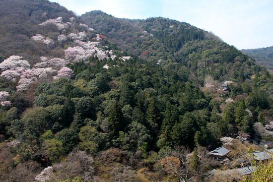 16桜だより18 嵐山3 亀山公園_e0048413_2043752.jpg
