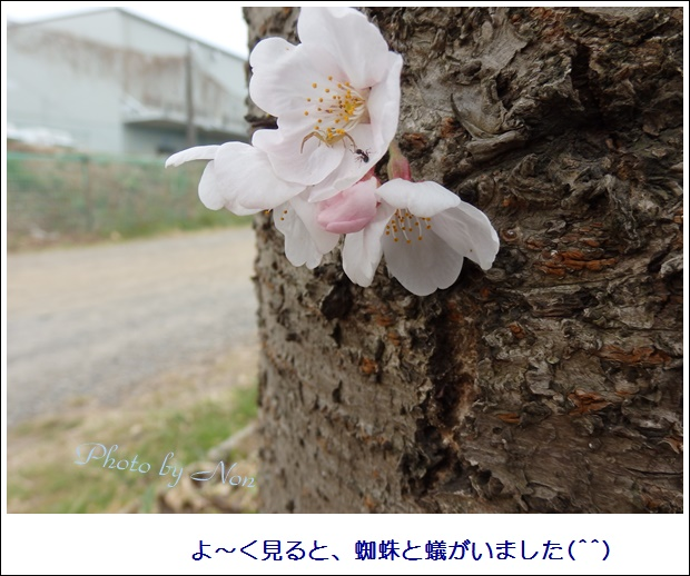 b0289815_8474450.jpg