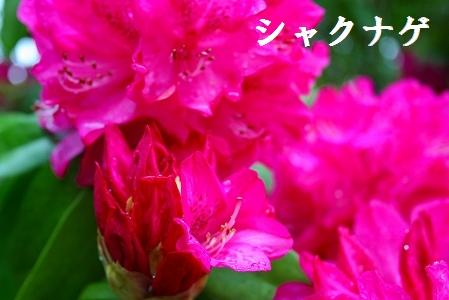 f0193521_20124139.jpg