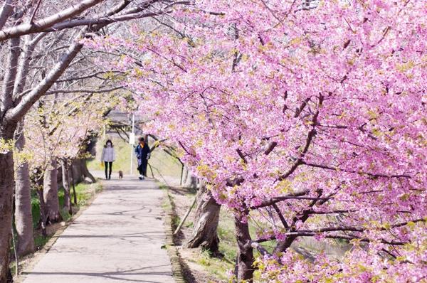【春の投稿まつり】結果発表①「小さい春、み~つけた!」ギフト券当選者一挙ご紹介!_f0357923_15492039.jpg