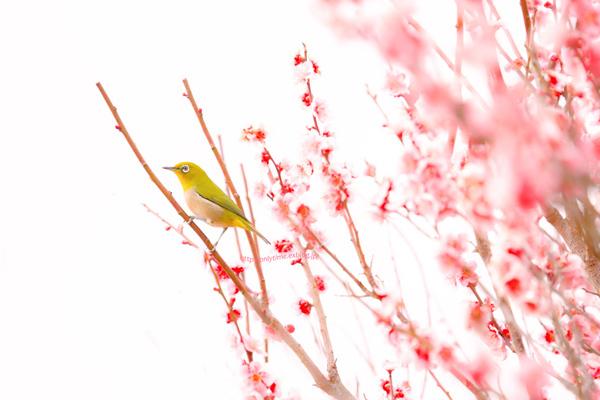 【春の投稿まつり】結果発表①「小さい春、み~つけた!」ギフト券当選者一挙ご紹介!_f0357923_15492068.jpg