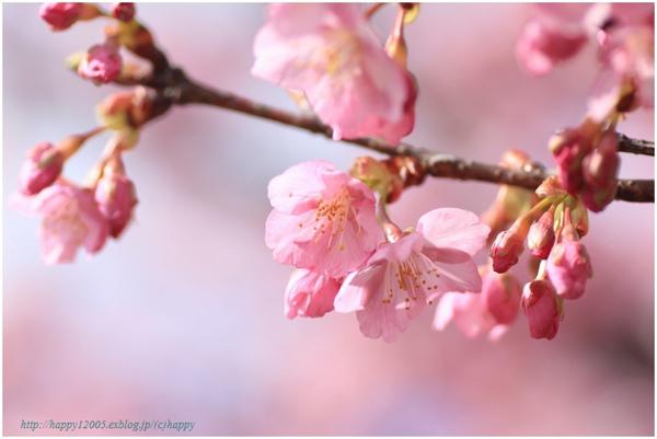 【春の投稿まつり】結果発表①「小さい春、み~つけた!」ギフト券当選者一挙ご紹介!_f0357923_15492073.jpg