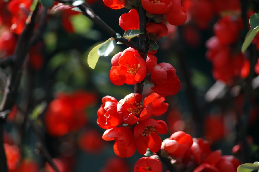 春・SD1 Merrillでお花を楽しむ_c0223825_02563729.jpg