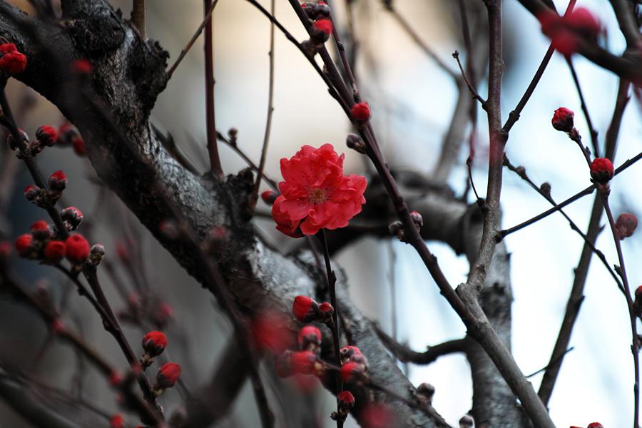 春・SD1 Merrillでお花を楽しむ_c0223825_03074046.jpg