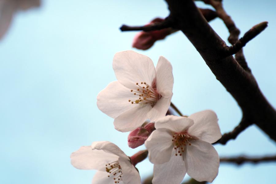春・SD1 Merrillでお花を楽しむ_c0223825_03090121.jpg