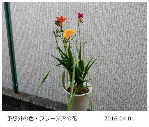 e0033229_1912697.jpg