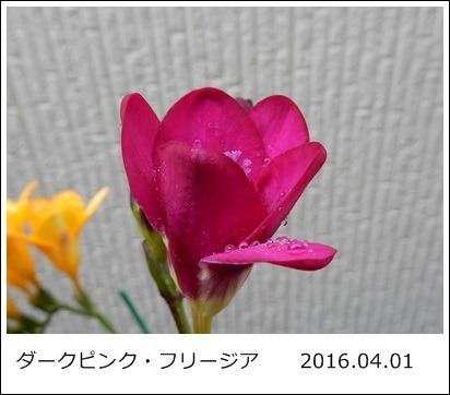 e0033229_19135824.jpg