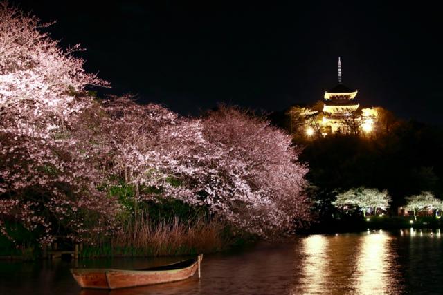 【三溪園】観桜の夕べ_f0348831_07562306.jpg