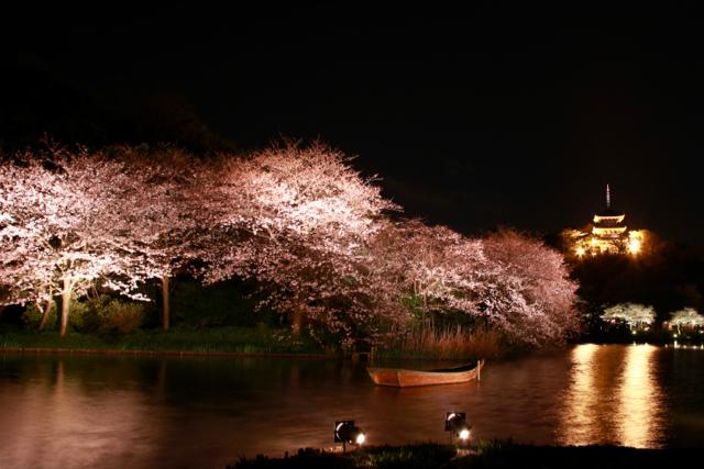 【三溪園】観桜の夕べ_f0348831_07562309.jpg