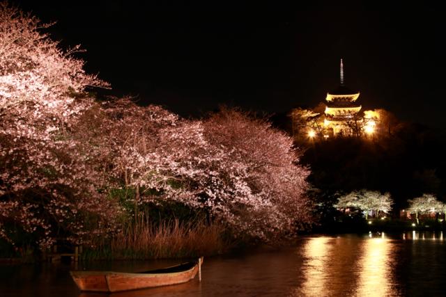 【三溪園】観桜の夕べ_f0348831_07562310.jpg