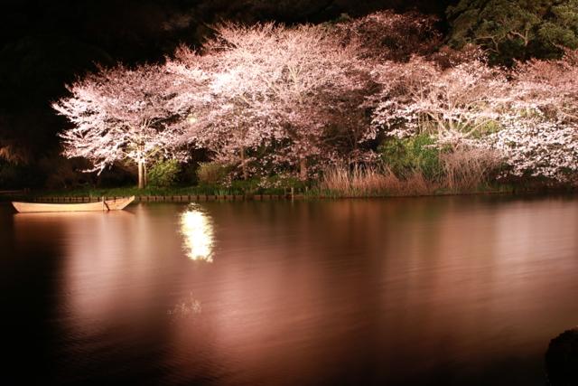 【三溪園】観桜の夕べ_f0348831_07562412.jpg