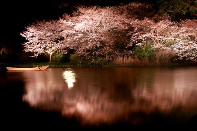【三溪園】観桜の夕べ_f0348831_07562423.jpg