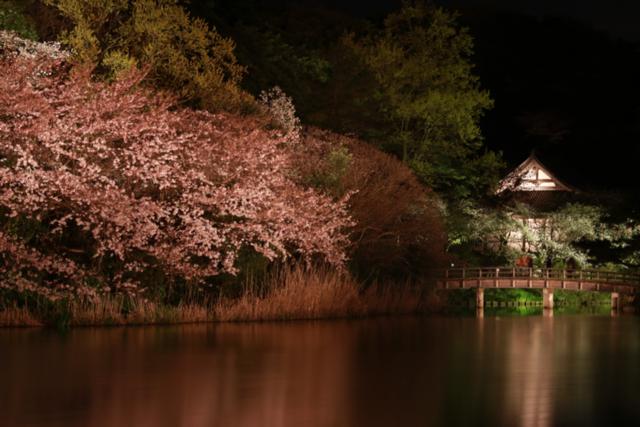 【三溪園】観桜の夕べ_f0348831_07562477.jpg