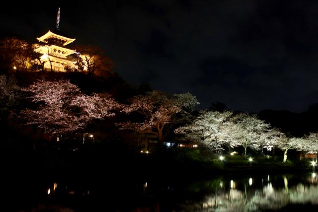【三溪園】観桜の夕べ_f0348831_07562545.jpg