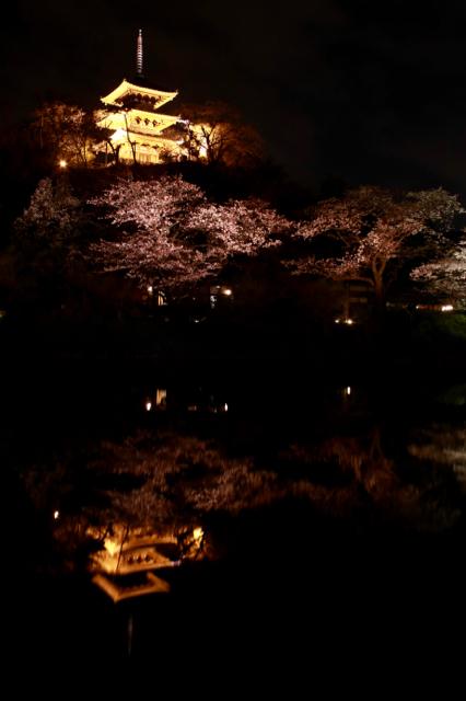 【三溪園】観桜の夕べ_f0348831_07562590.jpg