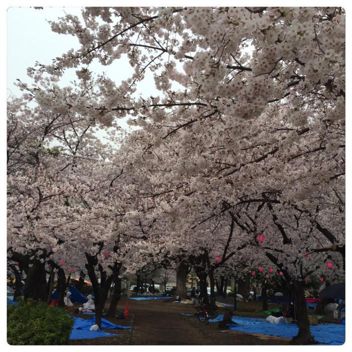 雨の鶴舞公園で研究開発を語る?_c0170233_17012228.jpg