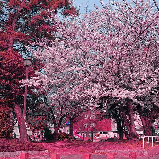 春らんまん☆カラフルおもちゃも満開です☆_c0084047_545064.jpg