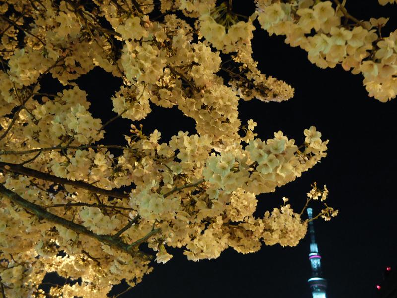 桜 千夏とおっちゃんのための_a0180681_134380.jpg