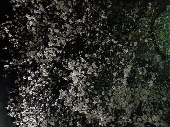 桜 千夏とおっちゃんのための_a0180681_136976.jpg