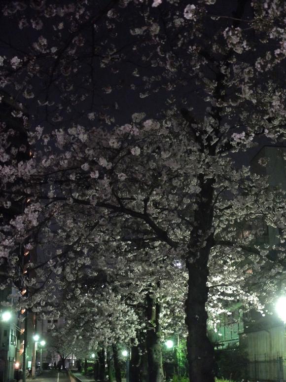 桜 千夏とおっちゃんのための_a0180681_1514679.jpg