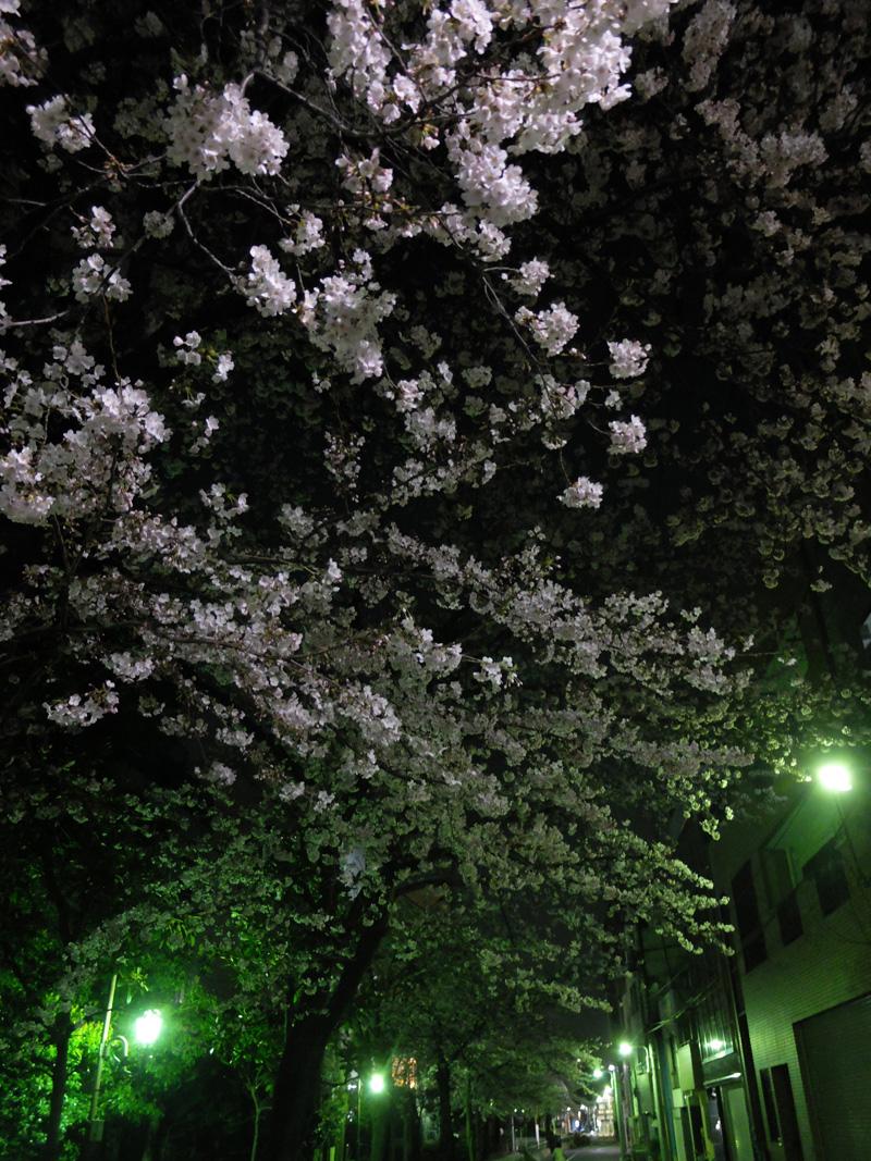 桜 千夏とおっちゃんのための_a0180681_212555.jpg