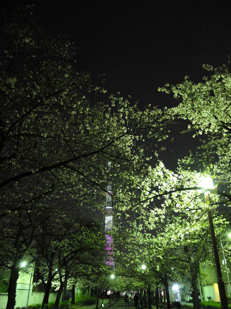 桜 千夏とおっちゃんのための_a0180681_21712.jpg