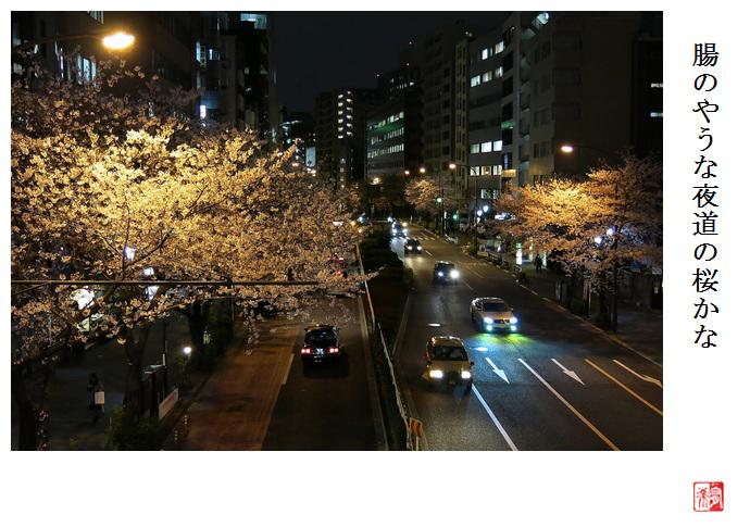 夜桜逍遥_a0248481_2303171.jpg