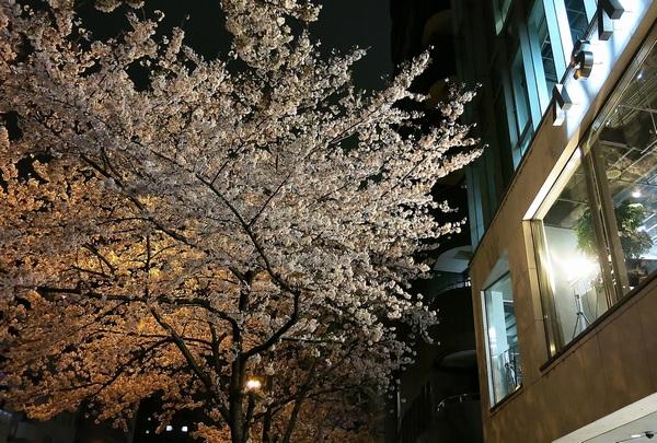 夜桜逍遥_a0248481_2305516.jpg