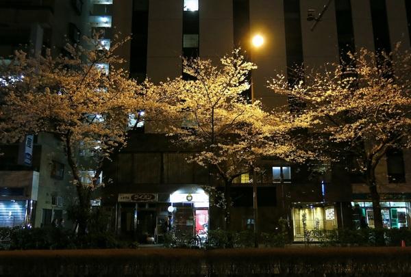 夜桜逍遥_a0248481_231941.jpg