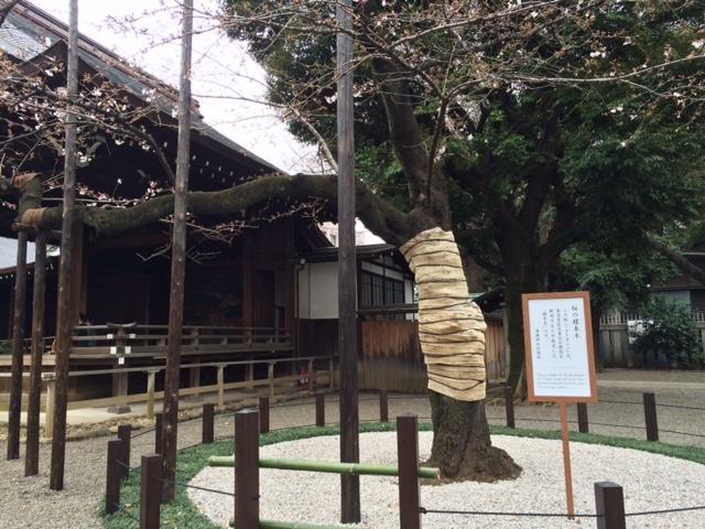 2016年の桜(1)_b0129897_16453616.jpg