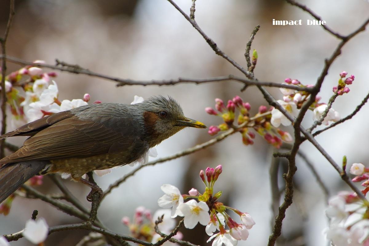 春が来た、植物園&公園へ♪_a0355908_21023049.jpg