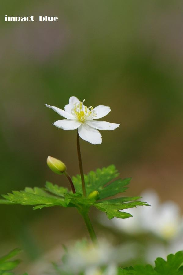春が来た、植物園&公園へ♪_a0355908_21025550.jpg