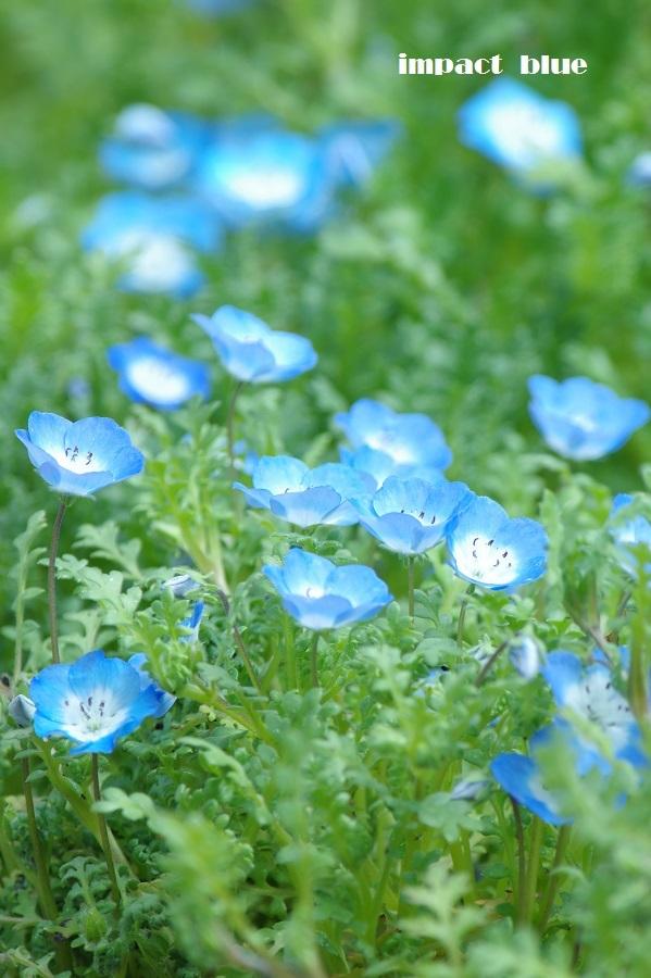 春が来た、植物園&公園へ♪_a0355908_21103577.jpg