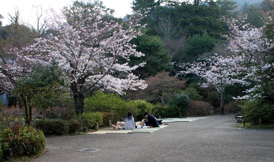 16さくら便り23 円山公園_e0048413_22204462.jpg