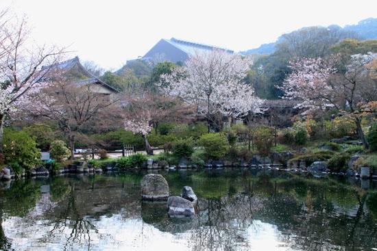 16さくら便り23 円山公園_e0048413_22211296.jpg