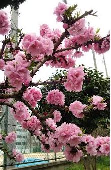 お散歩の季節(中平)_f0354314_16361190.png