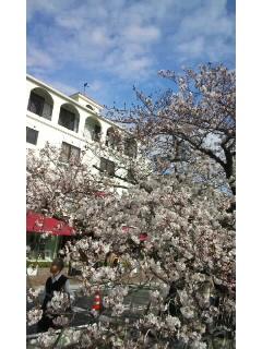 桜〜_f0126121_160391.jpg