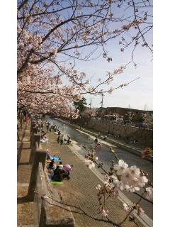 桜〜_f0126121_1604047.jpg