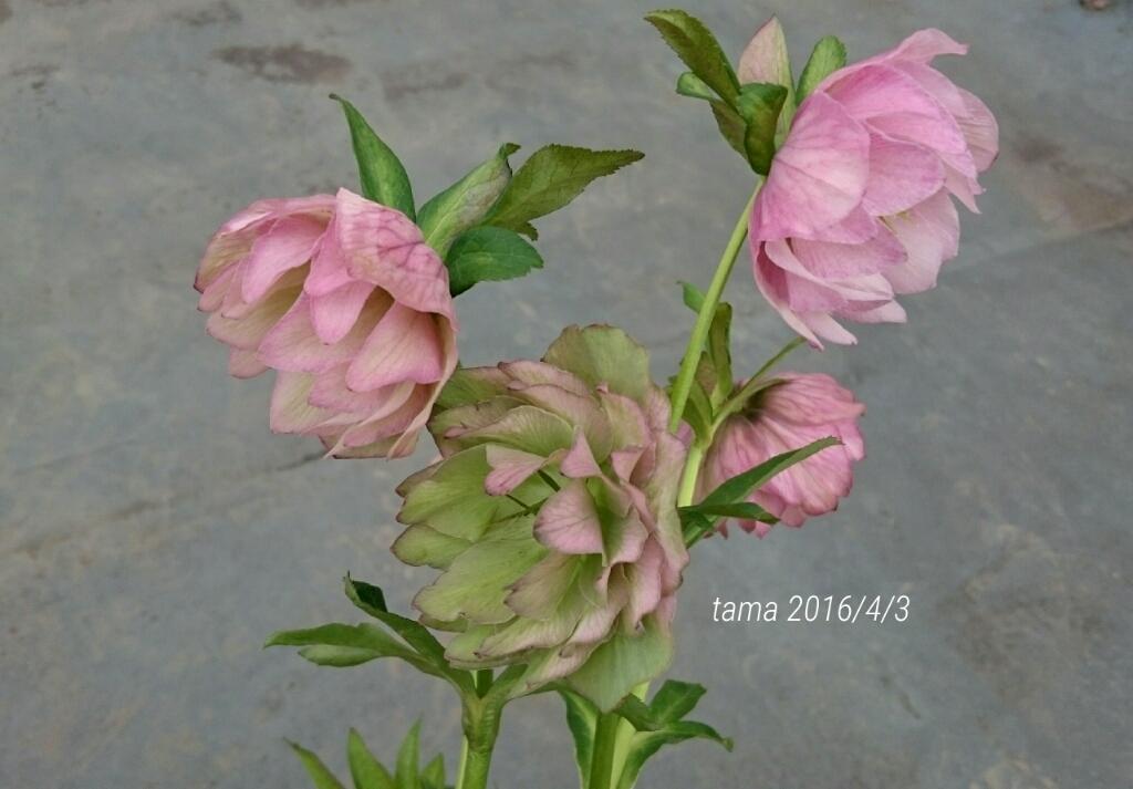 f0339422_15403609.jpg