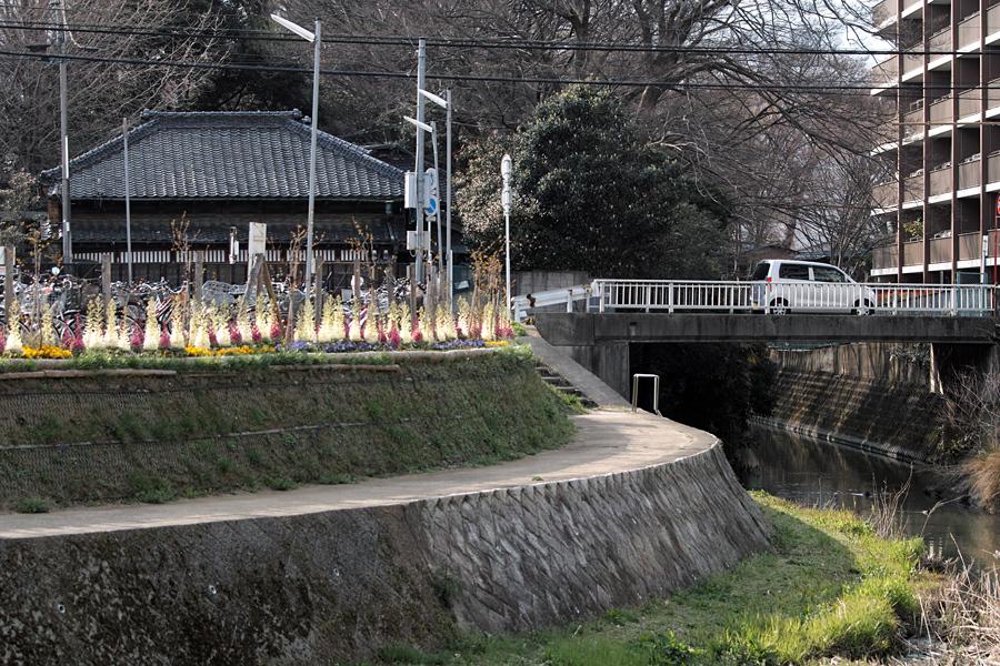 坂川の春をSD1 Merrillで_c0223825_12052566.jpg