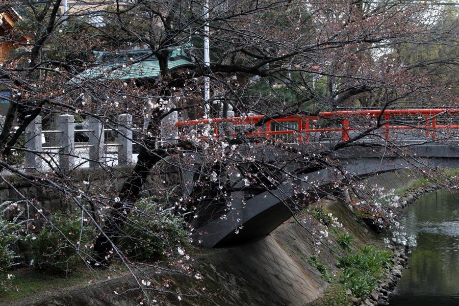 坂川の春をSD1 Merrillで_c0223825_12102110.jpg