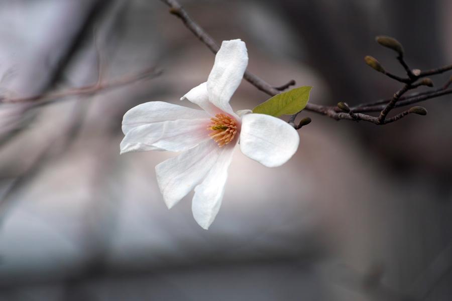 坂川の春をSD1 Merrillで_c0223825_12332944.jpg