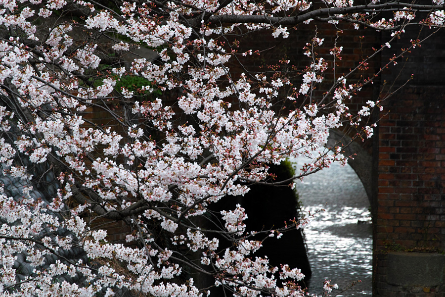 坂川の春をSD1 Merrillで_c0223825_12481180.jpg