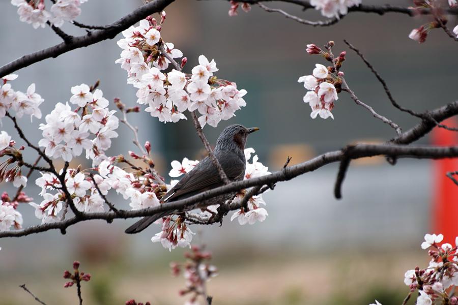 坂川の春をSD1 Merrillで_c0223825_12581813.jpg