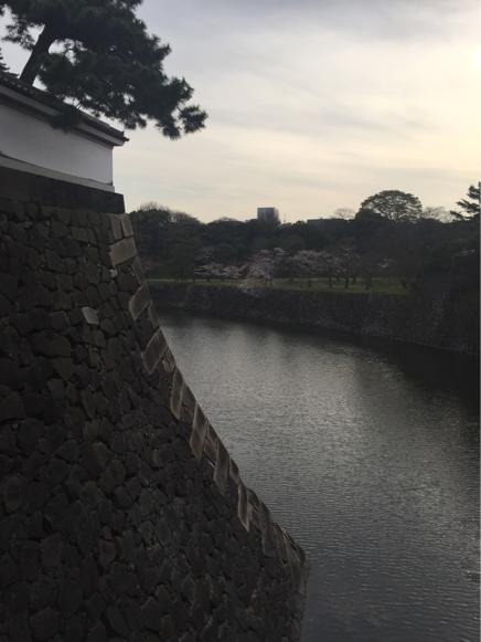 今年の桜_b0099226_09592438.jpg