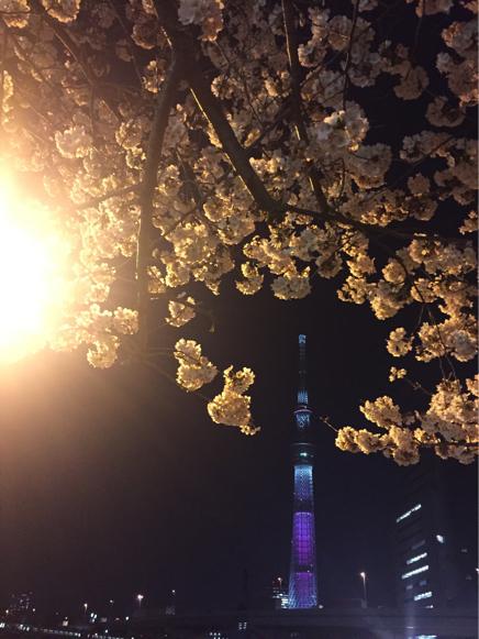今年の桜_b0099226_09592444.jpg