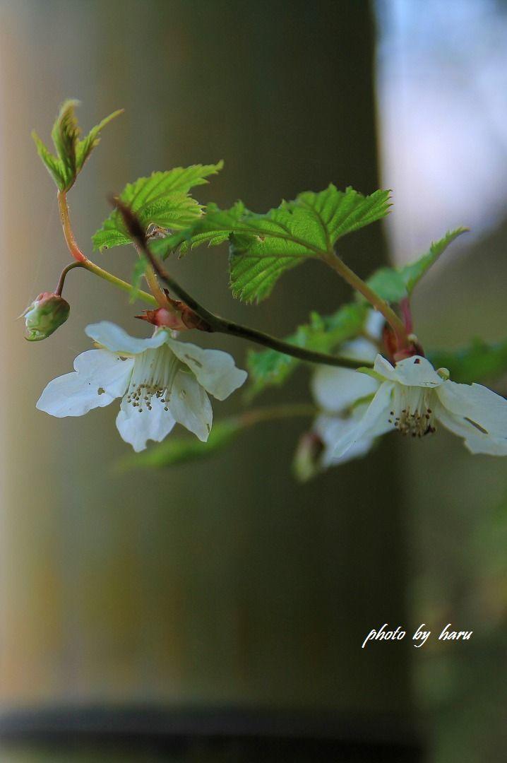 花見日和_f0297537_16331179.jpg