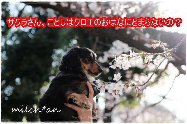 b0115642_16255281.jpg