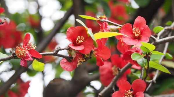 桜見物に行ってきたんだけどね その2_d0027243_22522782.jpg